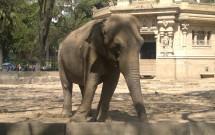 Elefante do Zoo de Palermo