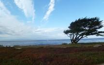 Bela Árvore na Orla de Monterey