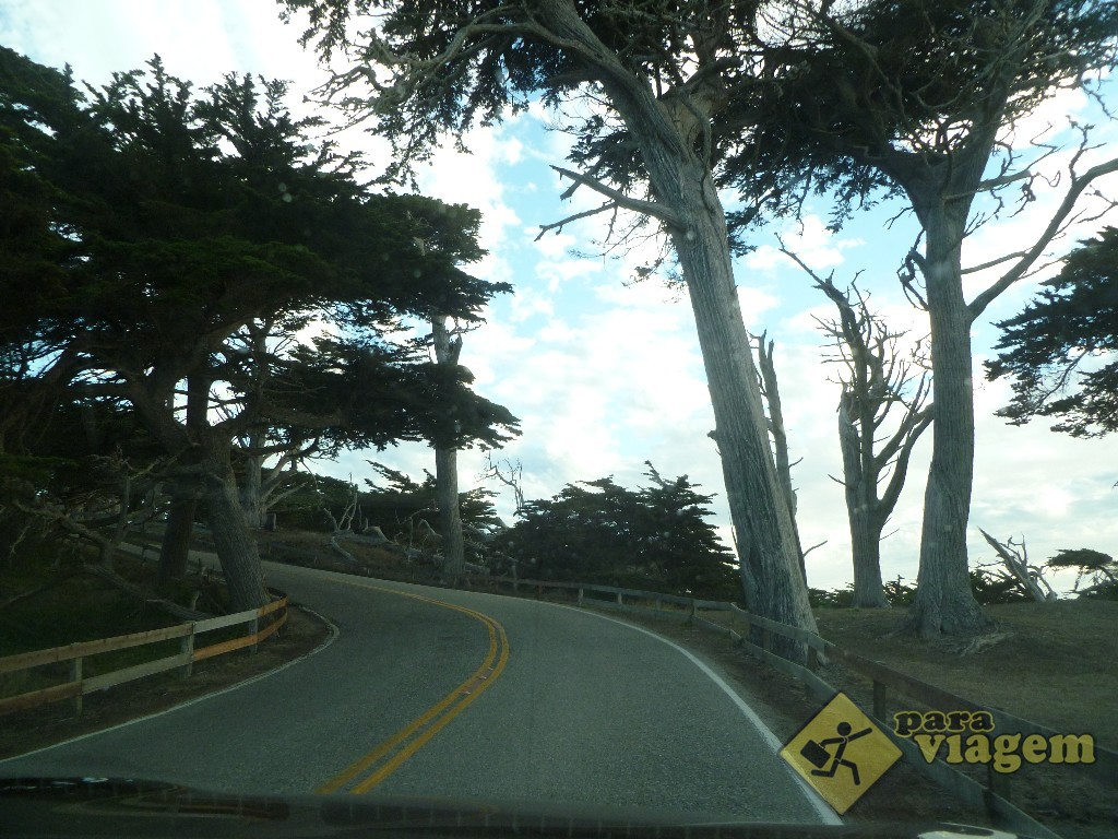 Árvores na 17 Mile Drive