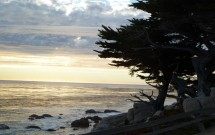 Árvores na Praia de Carmel