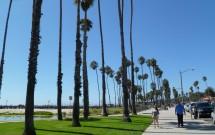 Árvores na Orla de Santa Barbara