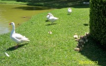 Habitantes do parque