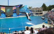Show da Shamu no Sea World de San Diego