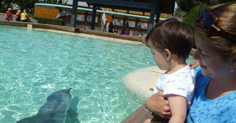 Apreciando os Golfinhos do Sea World