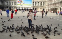 Os pombos e uma moça corajosa