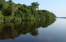 Detalhe do reflexo da vegetação nas águas do Rio