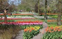 Keukenhof: Visitando o Parque de Flores na Holanda