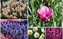 Várias espécies de flores em Keukenhof, além das tulipas. Algumas pétalas parecem feitas artesanalmente