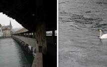 Fachadas da margem do Rio Reuss (esq) e um dos vários cisnes nadando no Rio Reuss (dir)