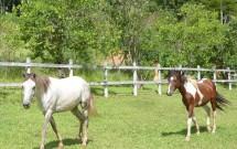Cavalos do Haras Morena