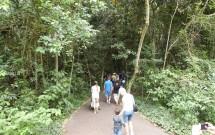 Trilha do Passeio Refugio Biológico na Usina de Itaipu