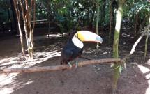Tucano no Parque das Aves