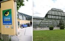 Tiergarten, o Zoo de Viena em Schönbrunn (esq) e o Palmenhaus (dir)