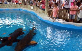 Alimentando Tubarões no Oceanário
