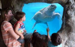 Crianças Vendo a Tartaruga Marinha do Oceanário