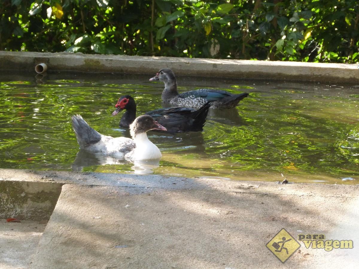 Patos na Pousada Terê Parque