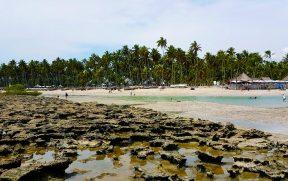 Um Dia na Praia dos Carneiros em Pernambuco