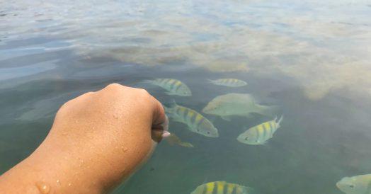 Alimentando peixes na piscina natural da  Praia dos Carneiros