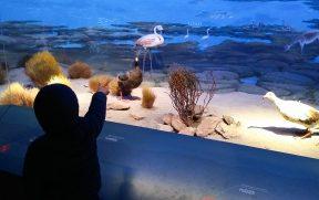 Criança conhecendo o Museu de História Natural