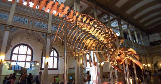 Esqueleto de Dinossauro no Museu de História Natural