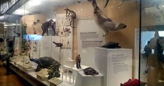 Coleção de história natural do ROM
