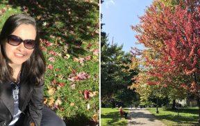 Outono canadense: árvores coloridas e folhas de maple caídas pelo chão