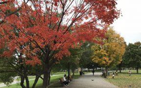 Folhas coloridas pelo outono canadense