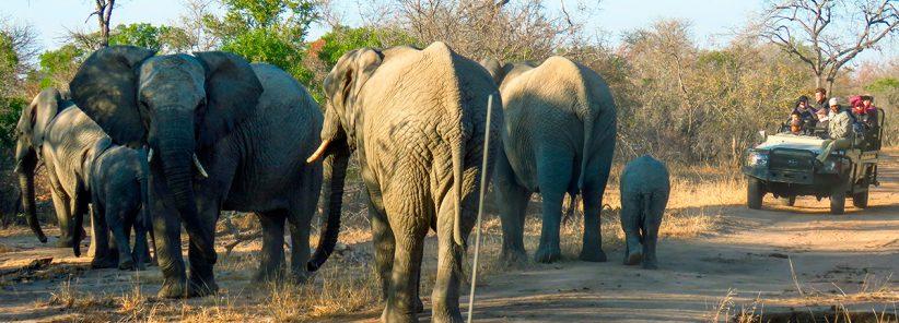 Elefantes em Safari na África do Sul