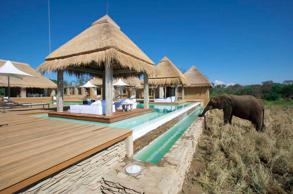 Elefante bebendo água na piscina