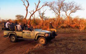 Rinocerontes em Safari no Kapama