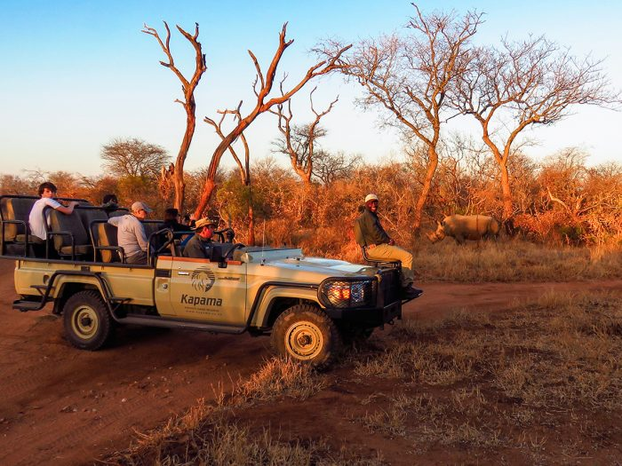 Rinocerontes em Safari na África do Sul