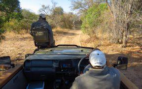Dois Veículos do Kapama Durante o Safari
