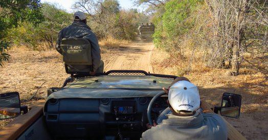 Dois veículos fazendo safari na África do Sul