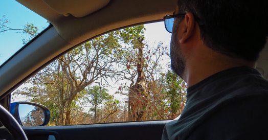 Dirigindo ao Lado da Girafa no Kapama