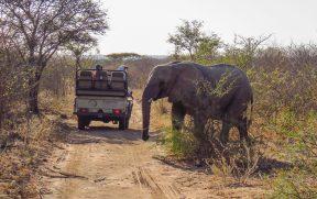 Elefante Cruzando a Estrada do Kapama