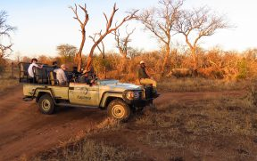 Rinocerontes no Game Drive do Kapama Southern Camp