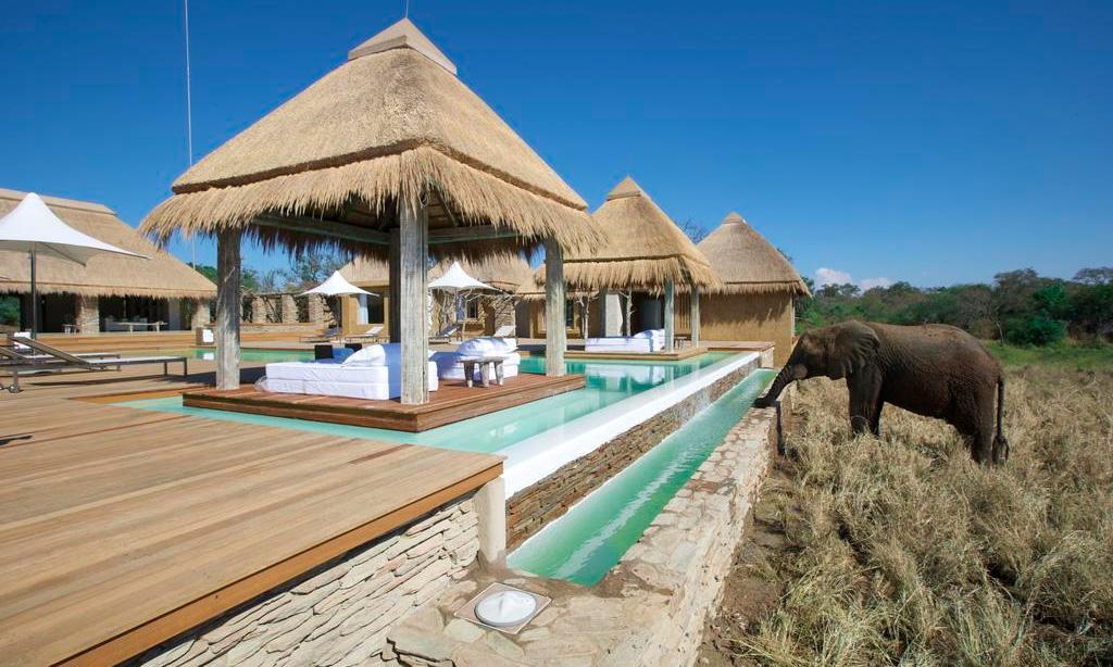 Elefante no Kapama River Lodge