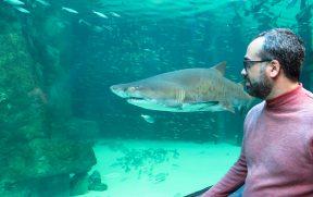 Pertinho dos Tubarões no Aquário