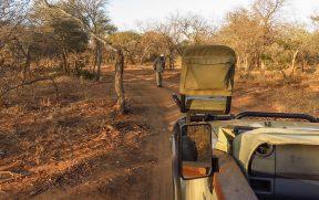 Tracker Procurando o Rastro dos Leões