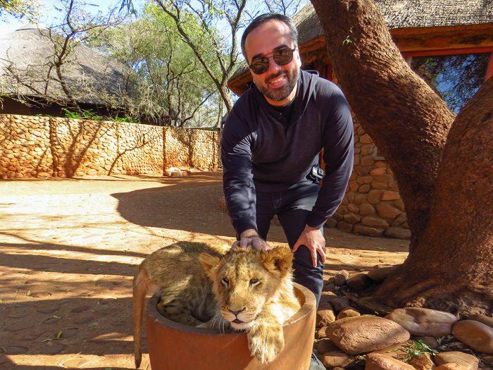 Leão de 5 Meses no Ukutula