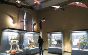 Museu de História Natural de Berlim