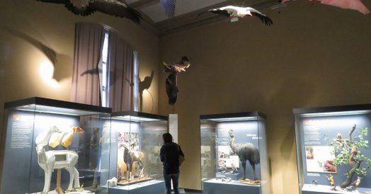 O que fazer em Berlim: Museu de História Natural