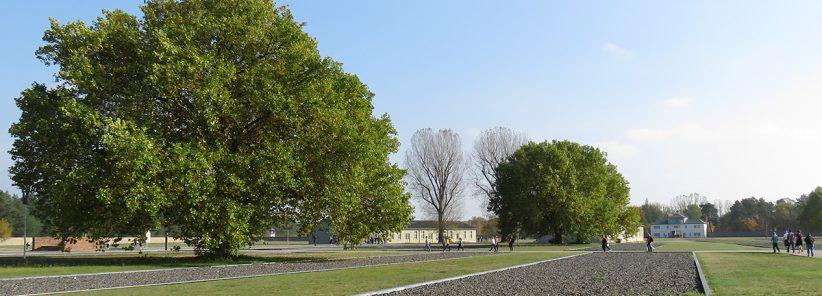 Belas árvores escondem o horror vivido em Sachsenhausen