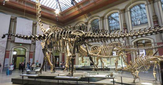 Maior fóssil de dinossauro já encontrado
